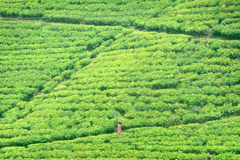 Visit Sri Lanka in 2021