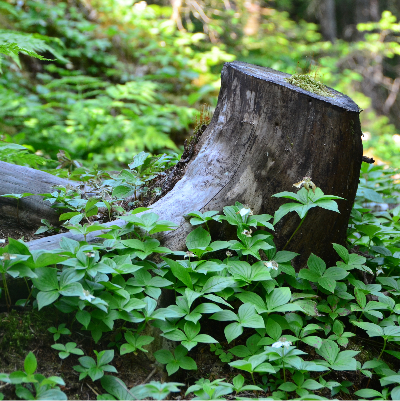 Beautiful tree stump