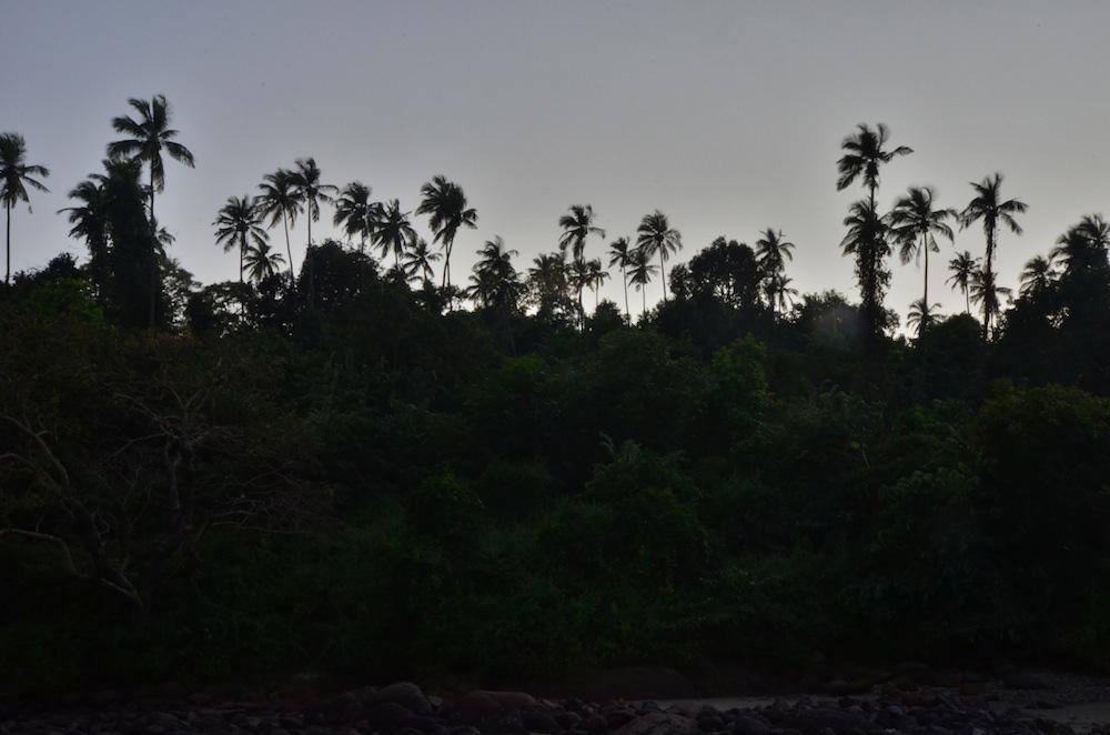 Palm Trees in Cuba