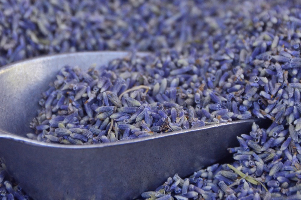 Lavender in Southern France