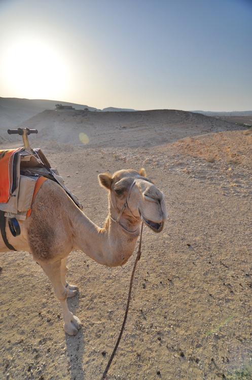 corey camel pow 12