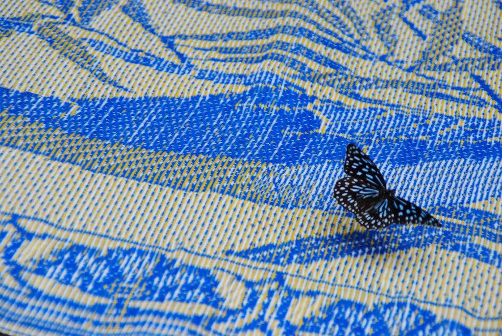 Laos Butterfly
