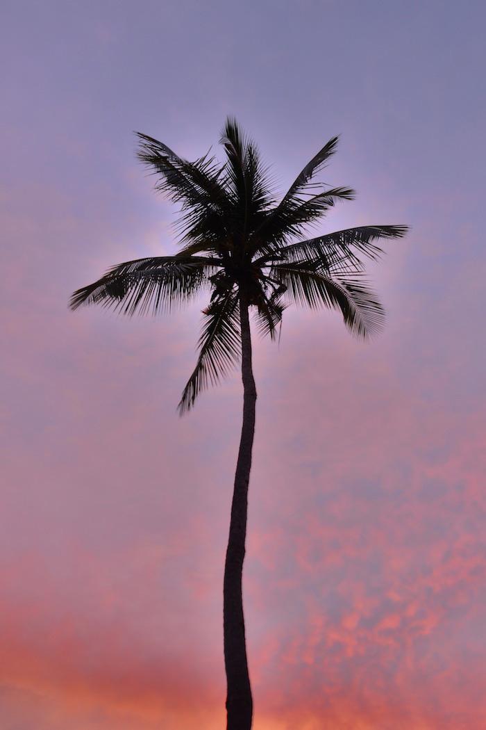 Palm tree in Raja Ampat Indonesia