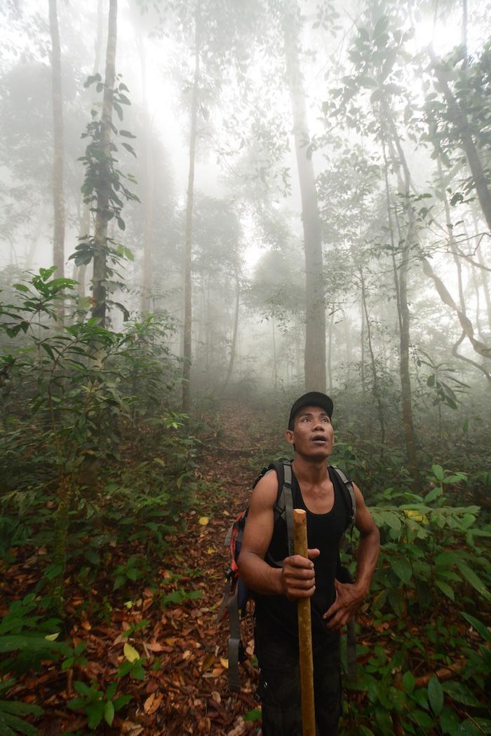 Tour guide in Borneo