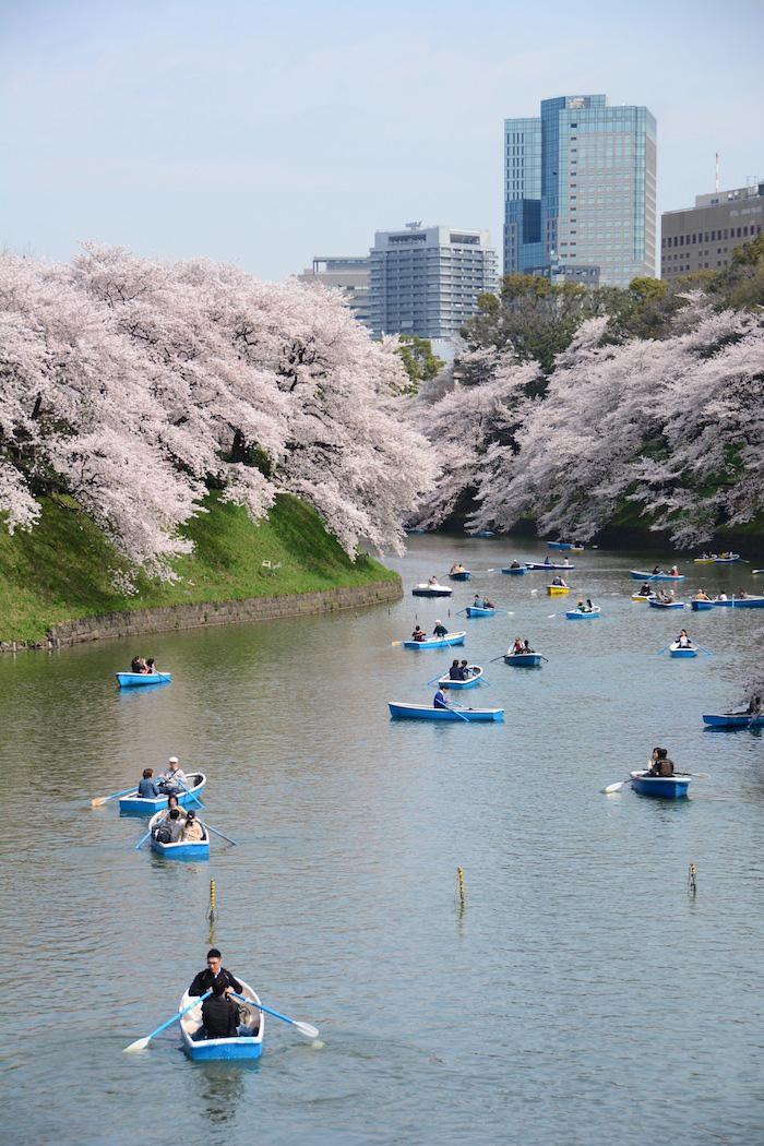 Japan travel pictures of Sakura in Tokyo