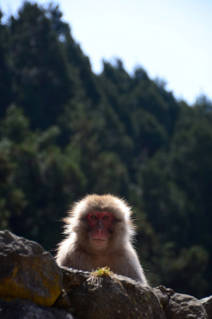 These Japanese Snow Monkeys are the Cutest Thing You'll ... - photo#17