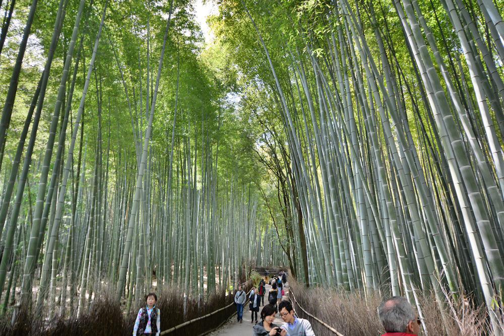 Arashiyama Bamboo Forest im Japan