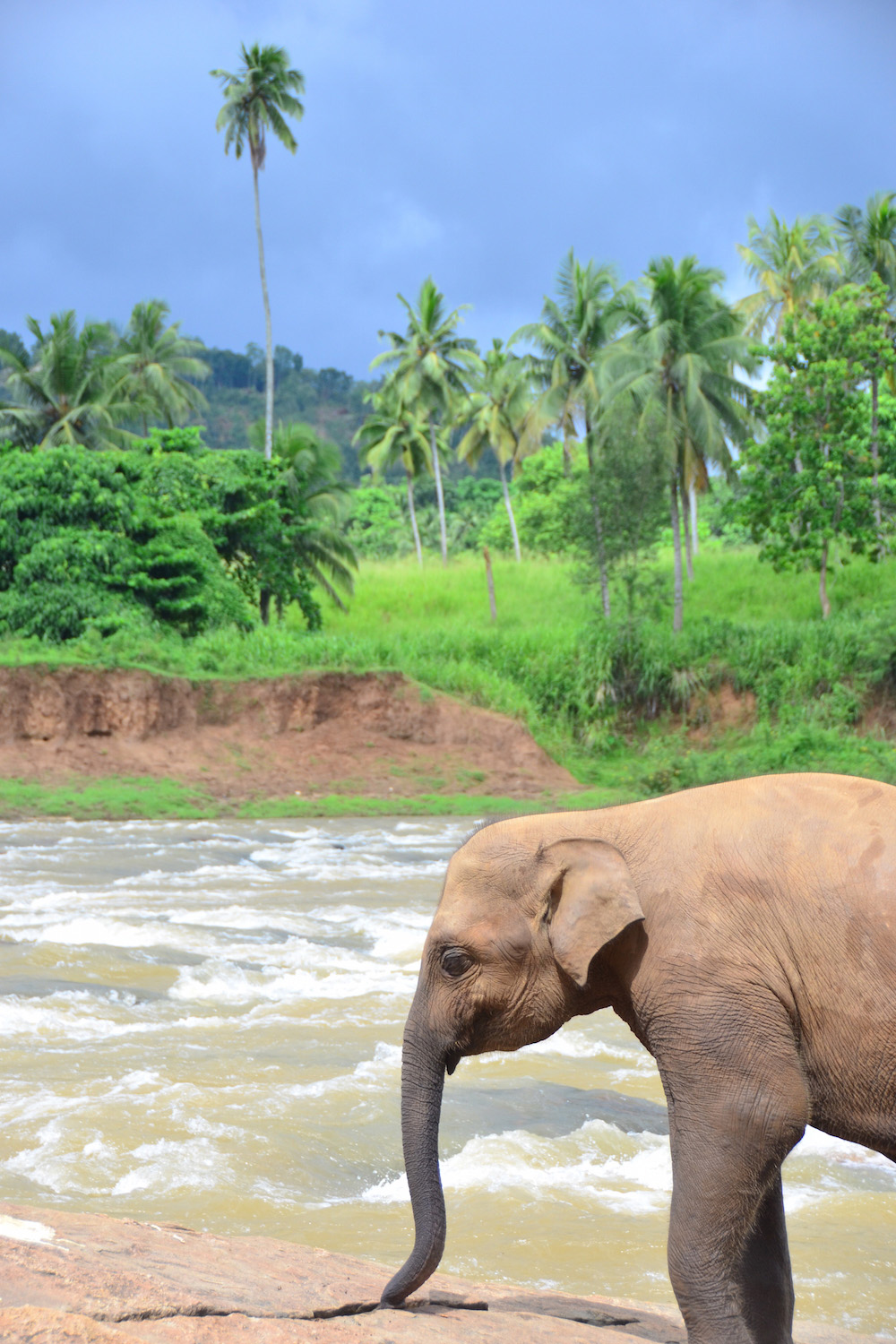 Elephant at a river