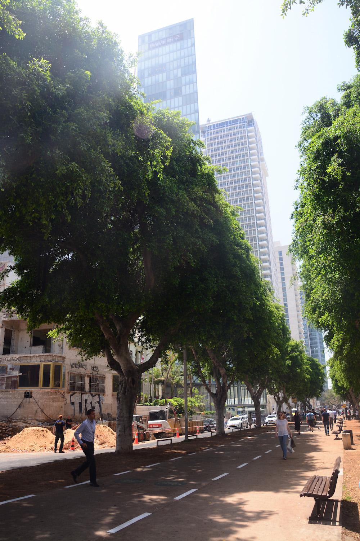 Tel Aviv Rothschild Boulevard
