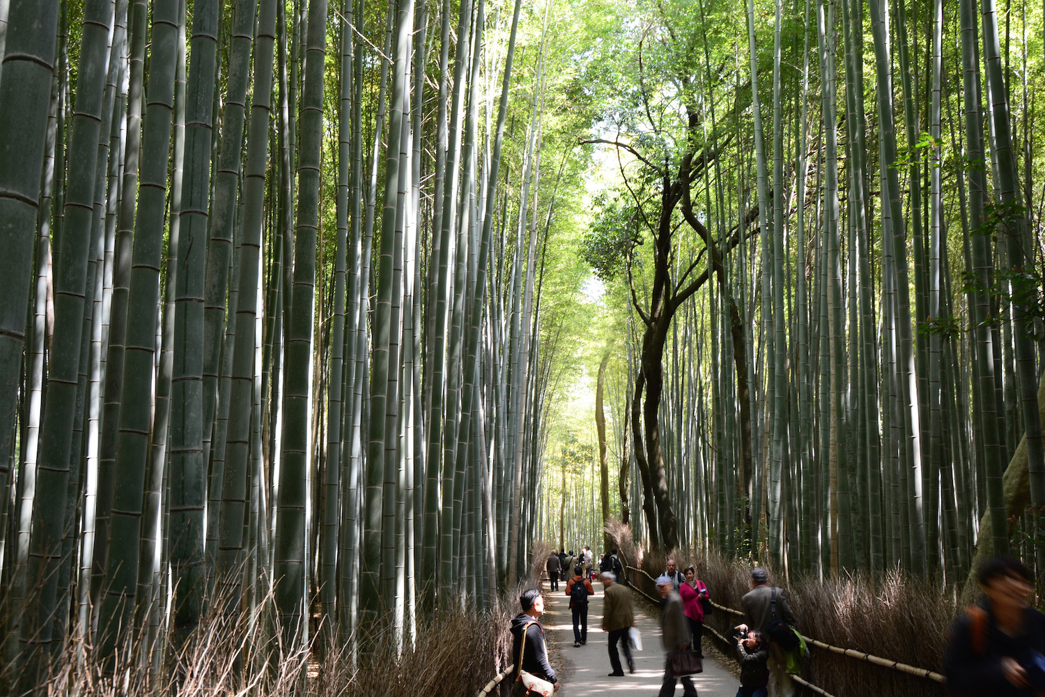 Arashiyama Bamboo Forest im Japan