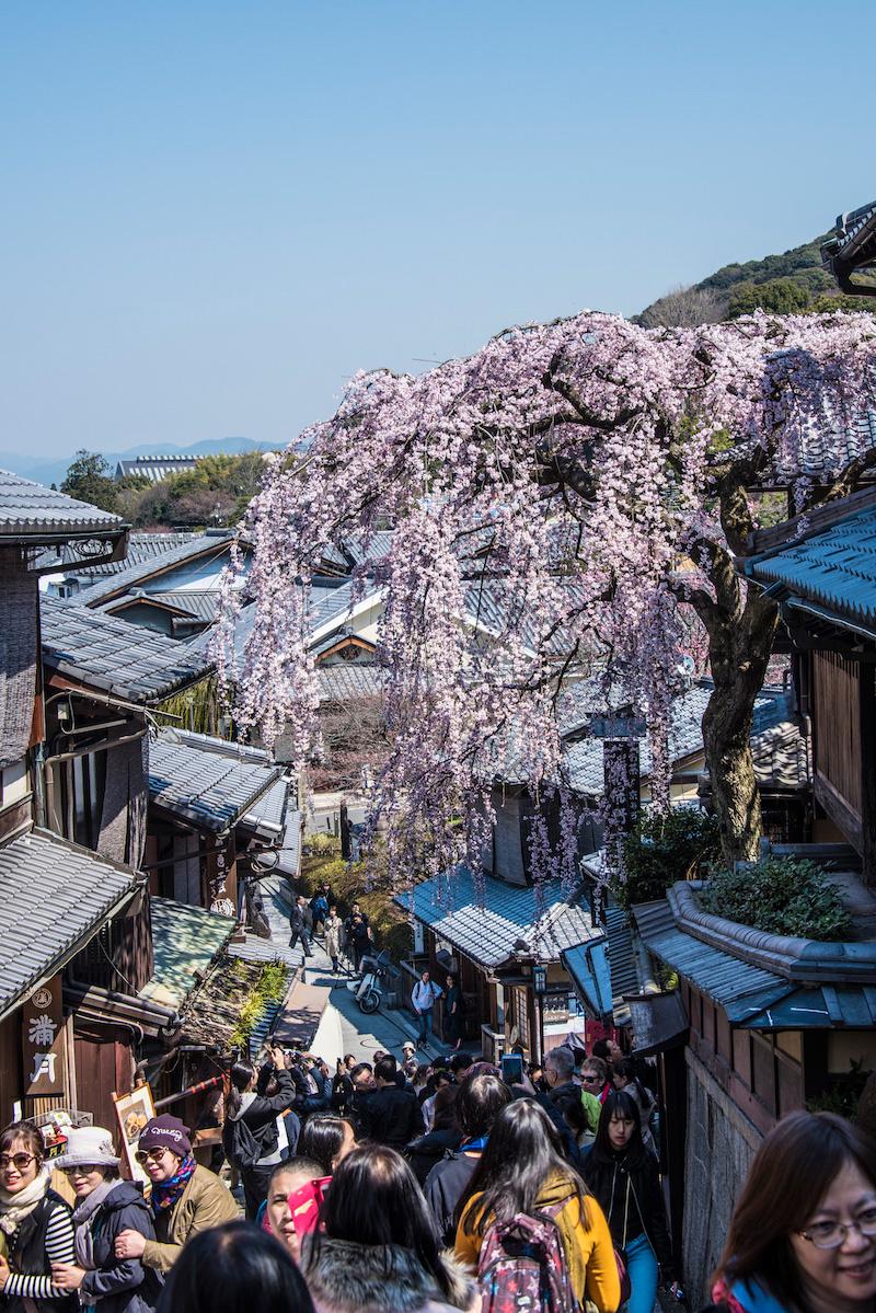 Kyoto, Japan sakura