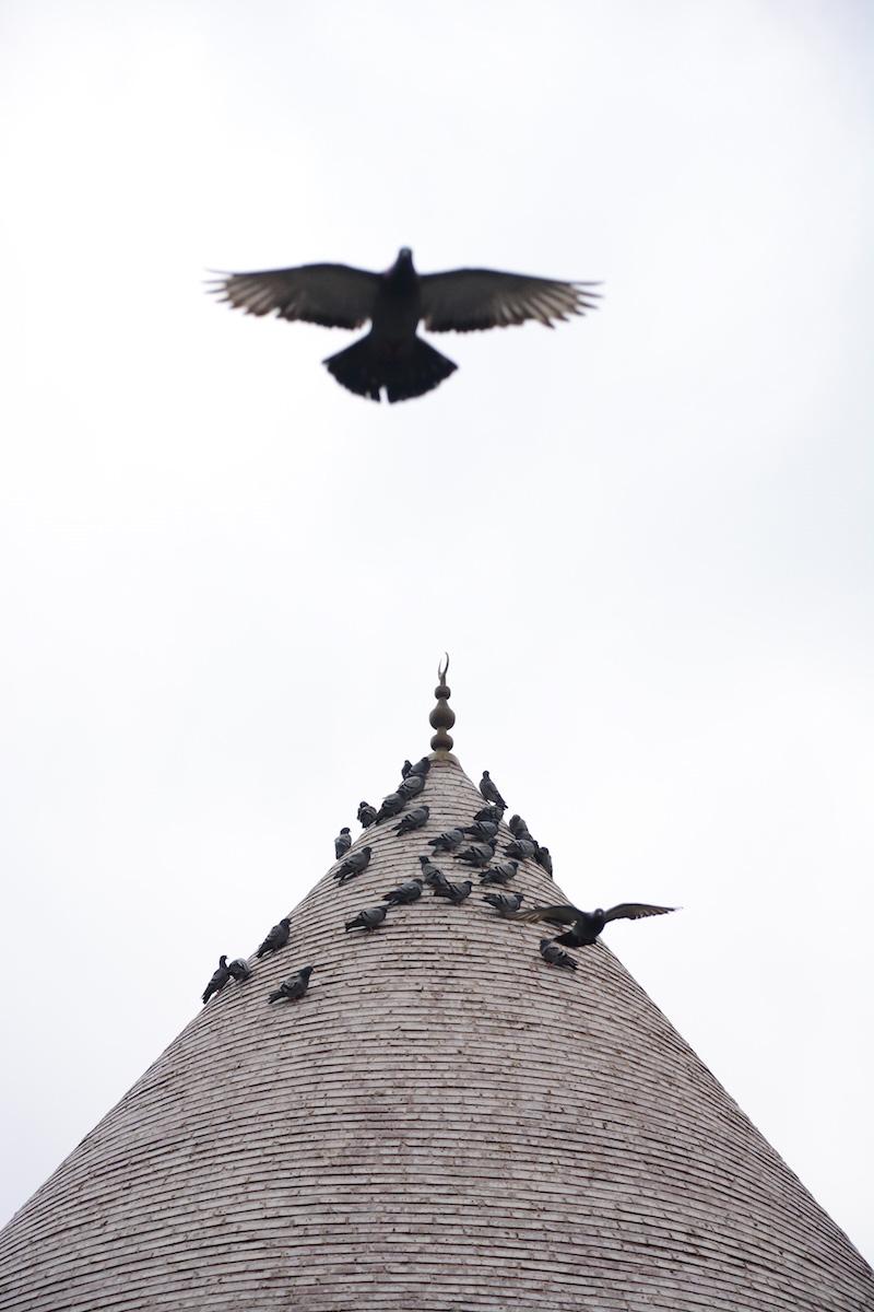 Birds flying over mosque in Konya, Turkey