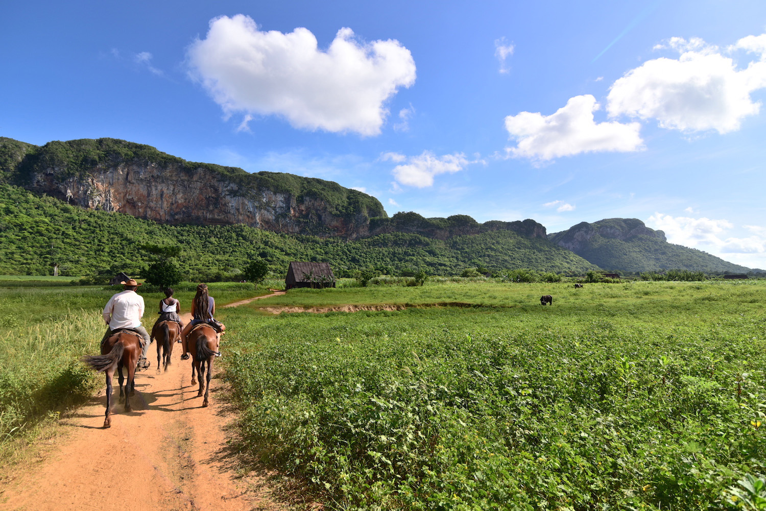 Cuba travel picture horses in Viñales
