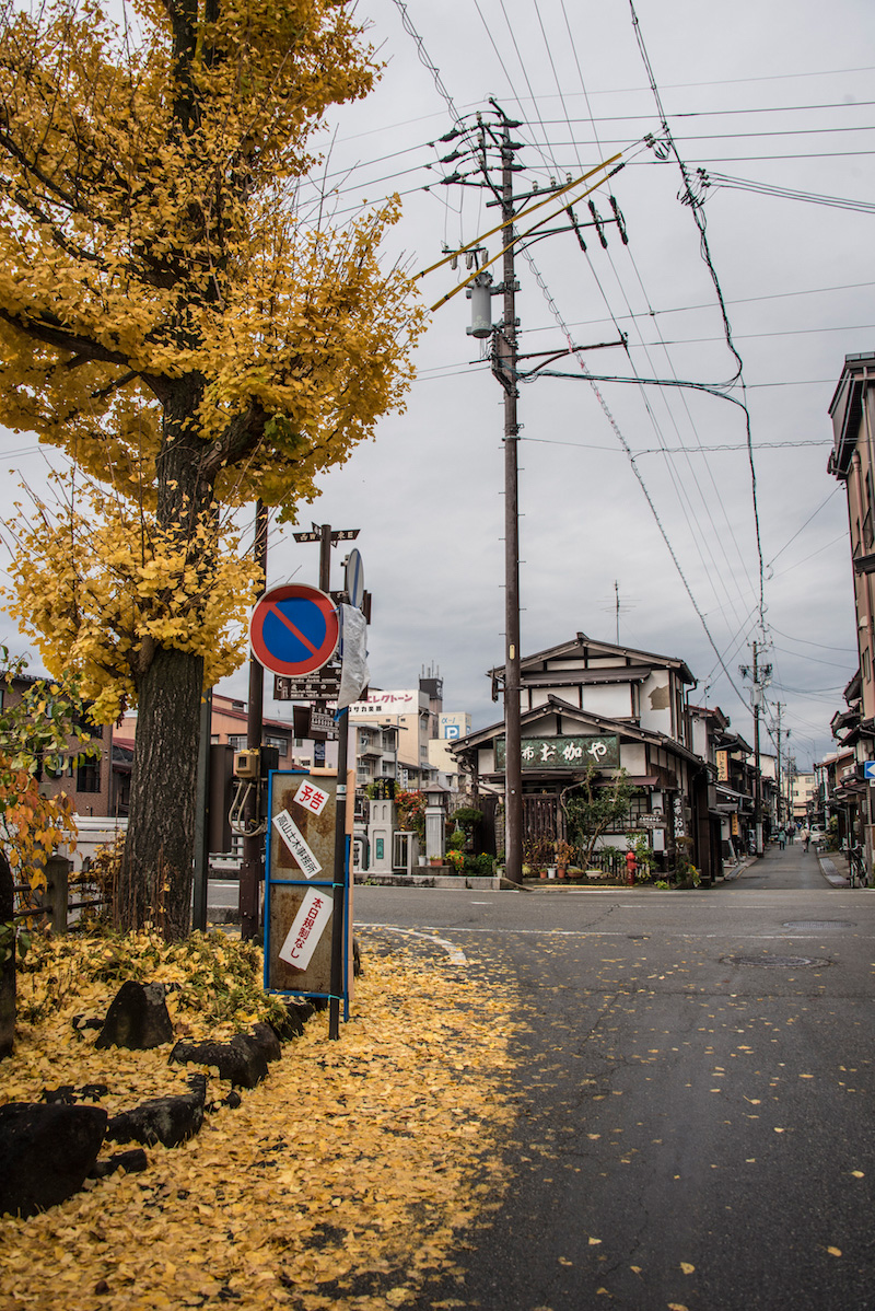 Gingko leaves in Takayama, Japan