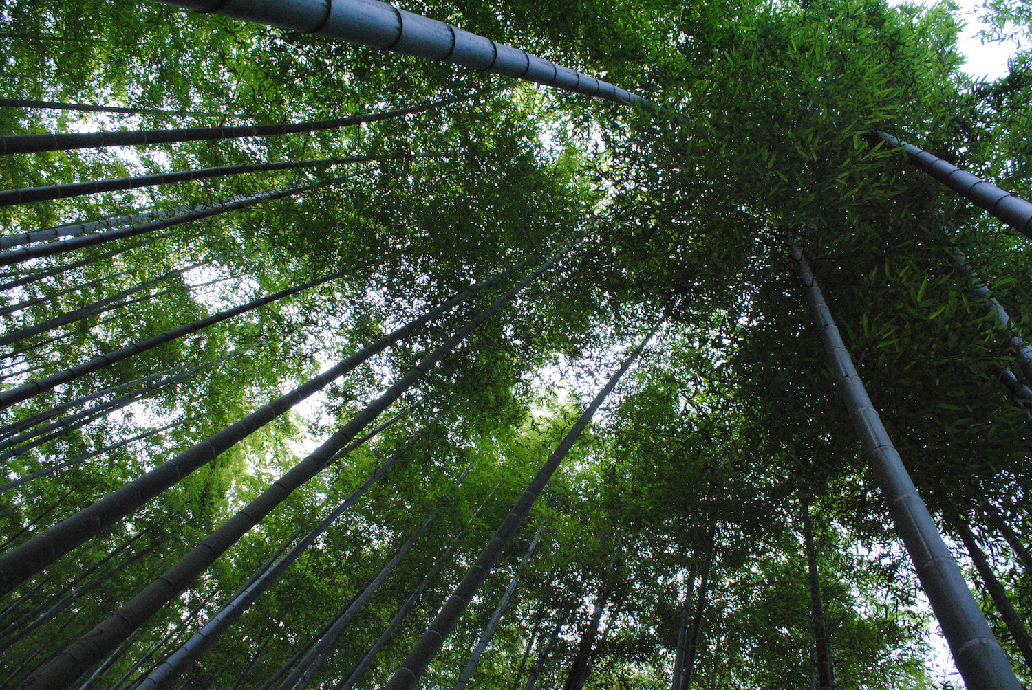 Anji Bamboo Forest in China