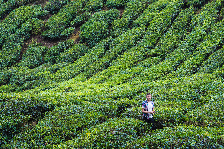 Robert Schrader in Cameron Highlands, Malaysia