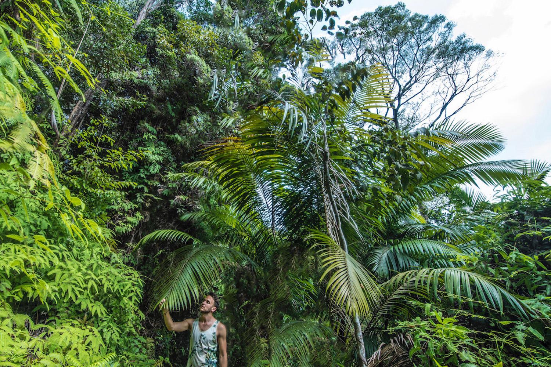 Jungle in Penang Malaysia