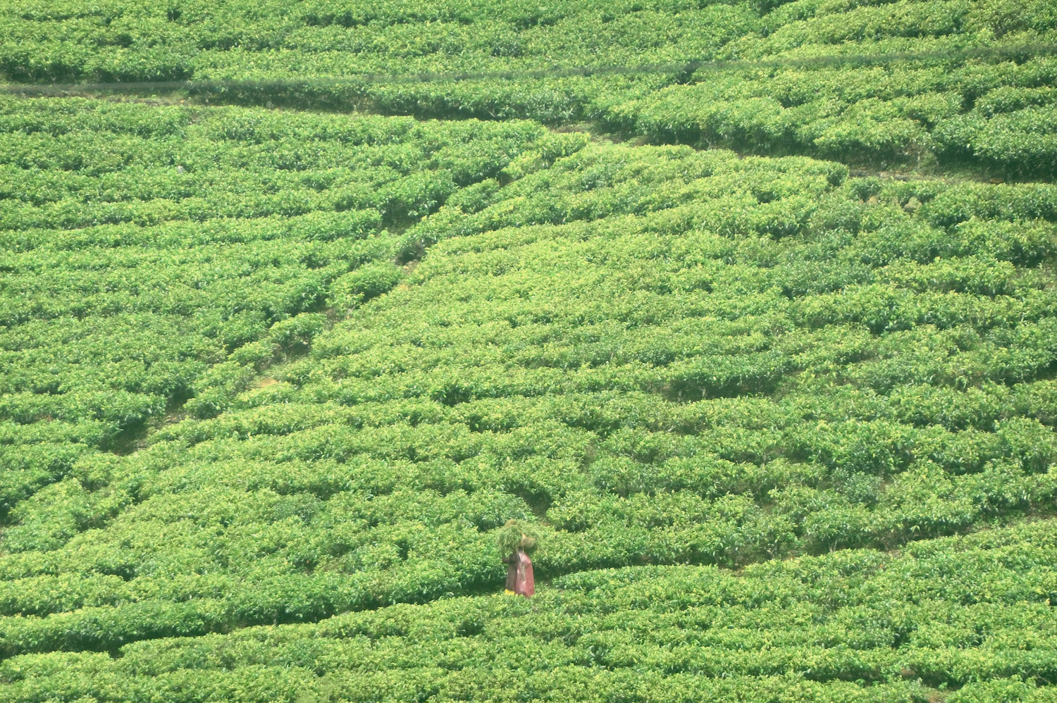 Sri Lanka Tea Country