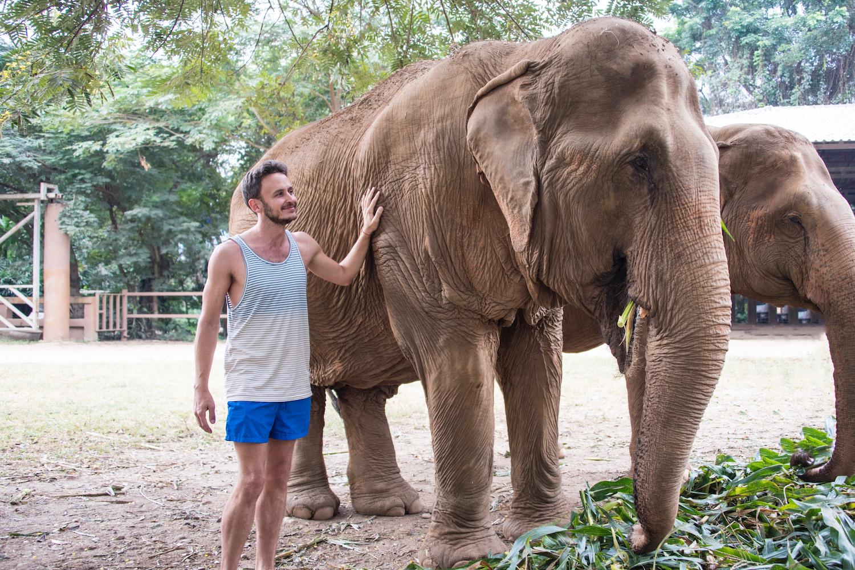 Thailand Elephant Chiang Mai