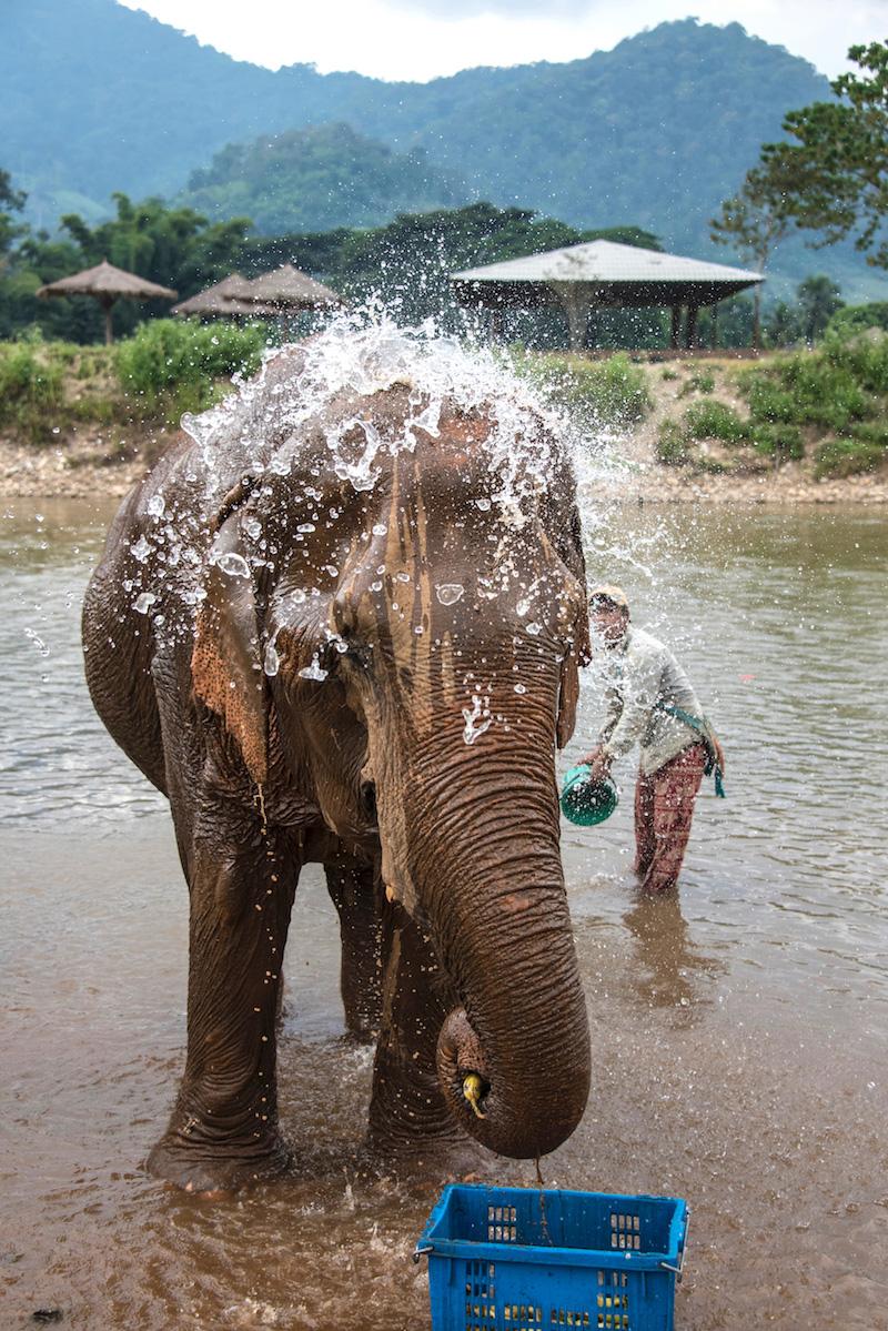 Chiang Mai Elephant bath