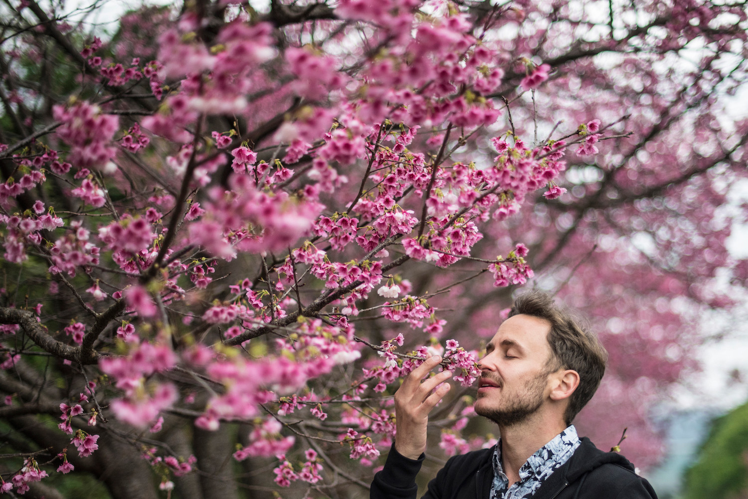 Robert Schrader sniffing cherry blossoms in Okinawa