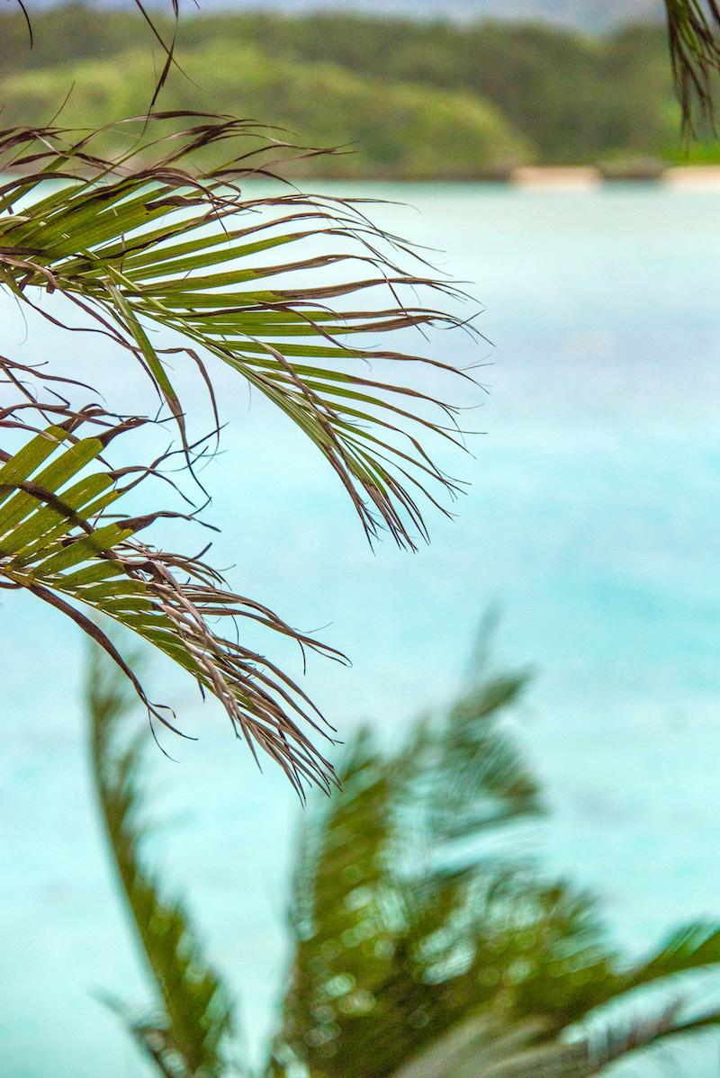 Kabira Bay Palm Trees Okinawa winter