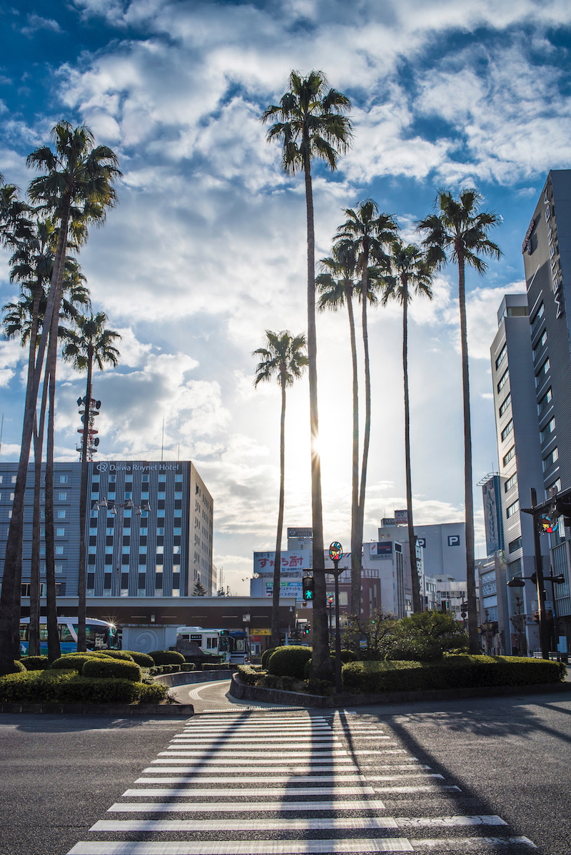 Palm Trees in Japan