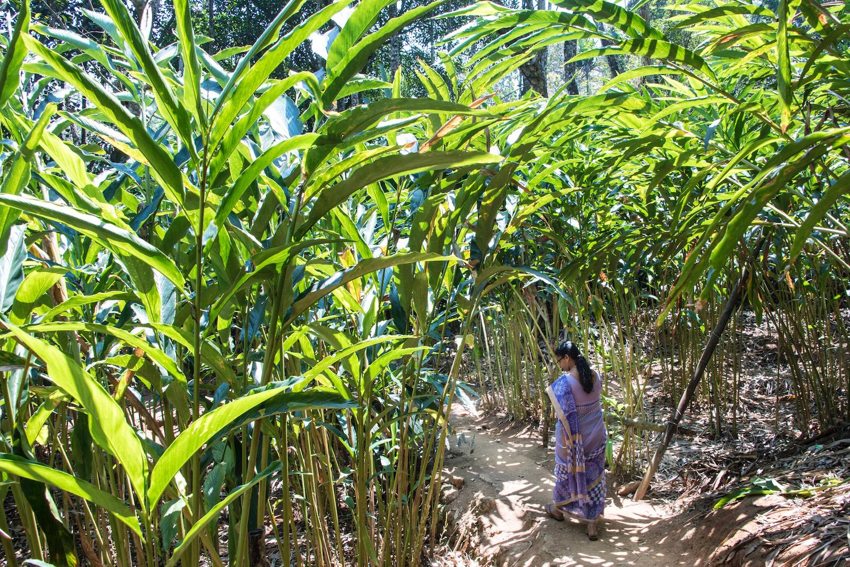 Munnar Kerala Spice Garden