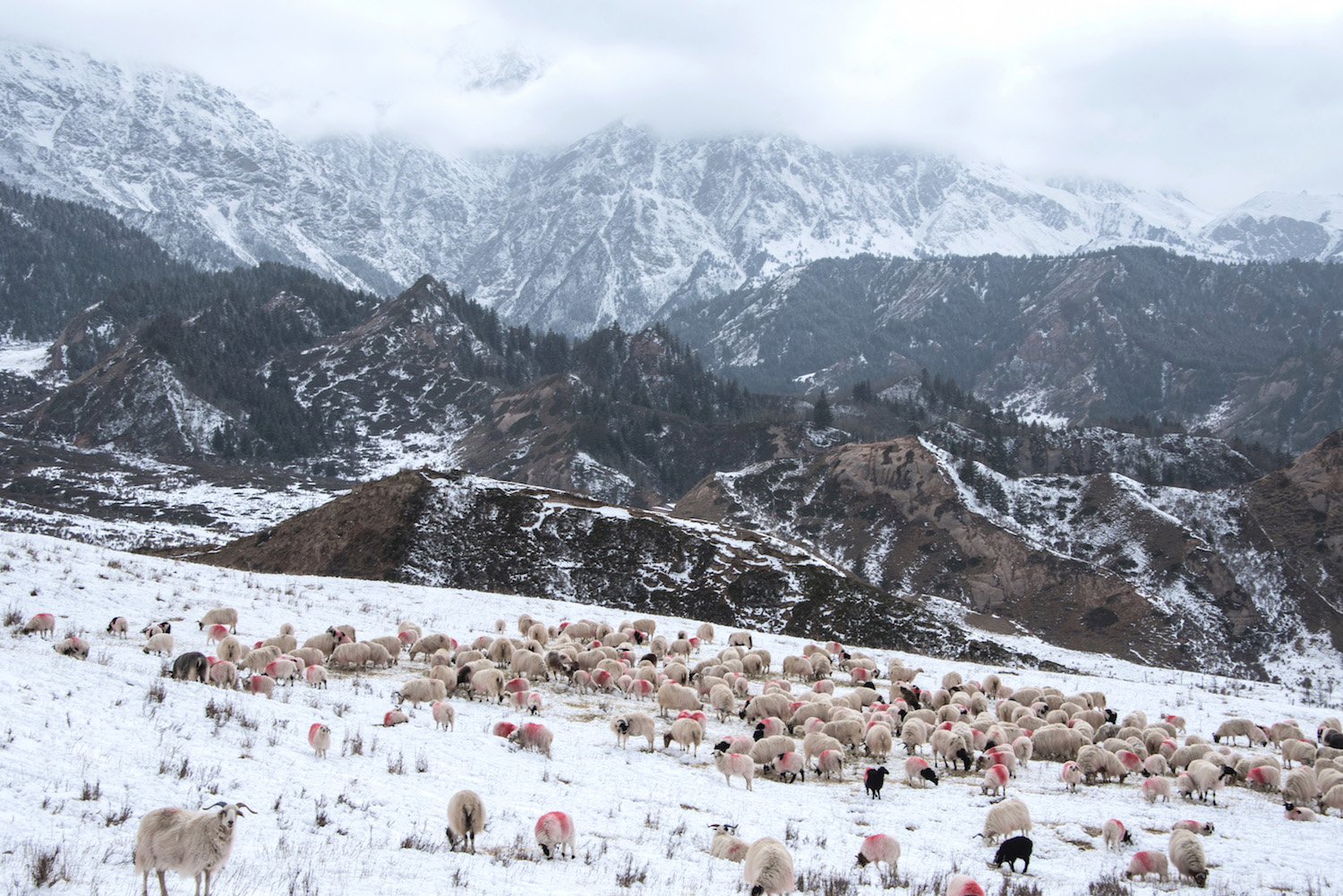 Snow in Gansu, China
