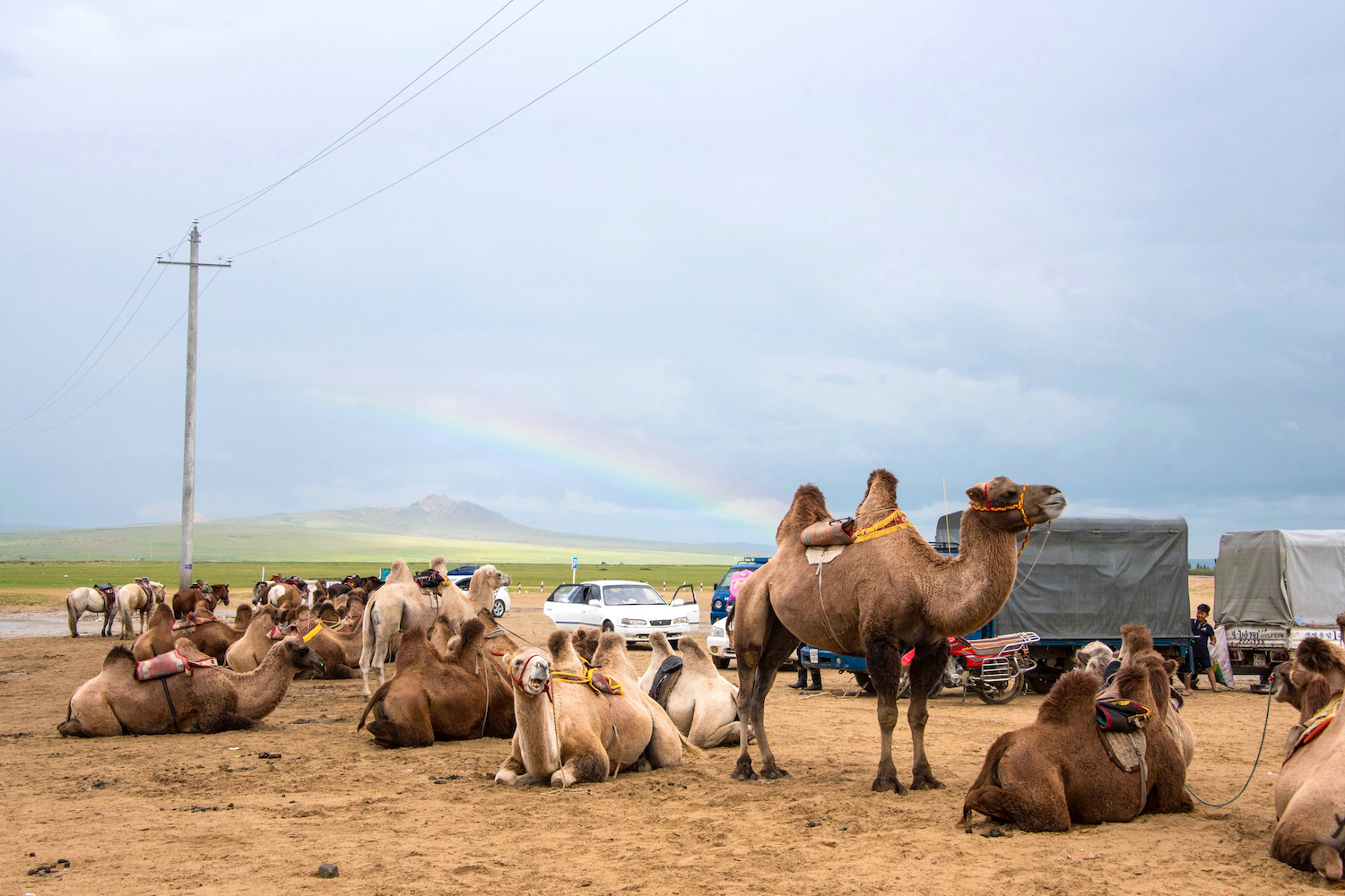 Rainbow and camel in Mongolia