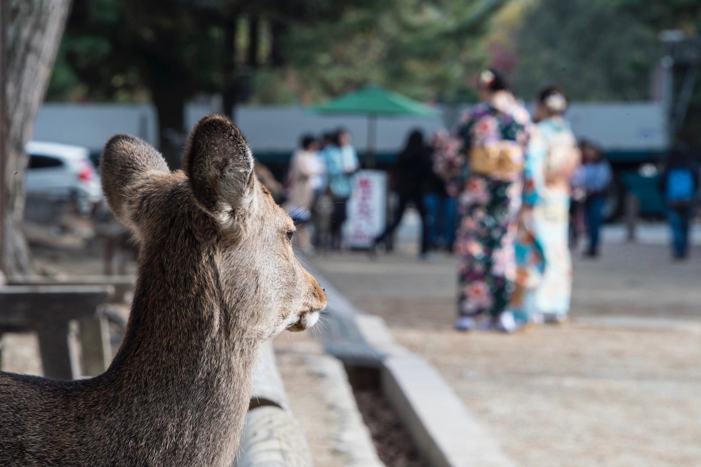 Osaka Nara