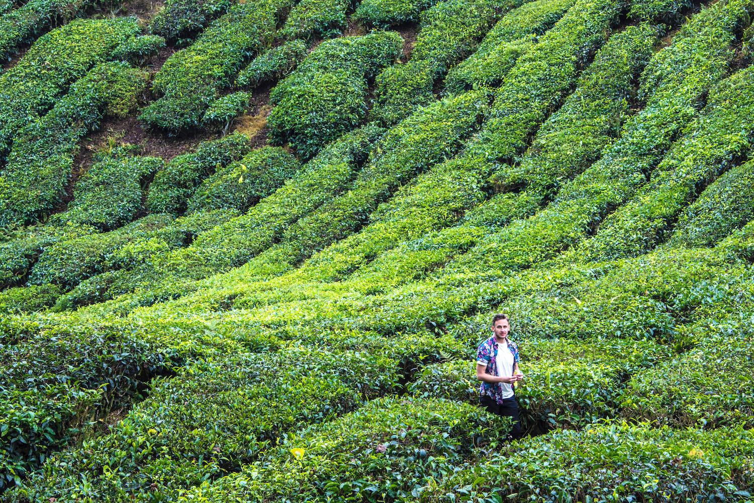 Are the Cameron Highlands Worth a Trip?