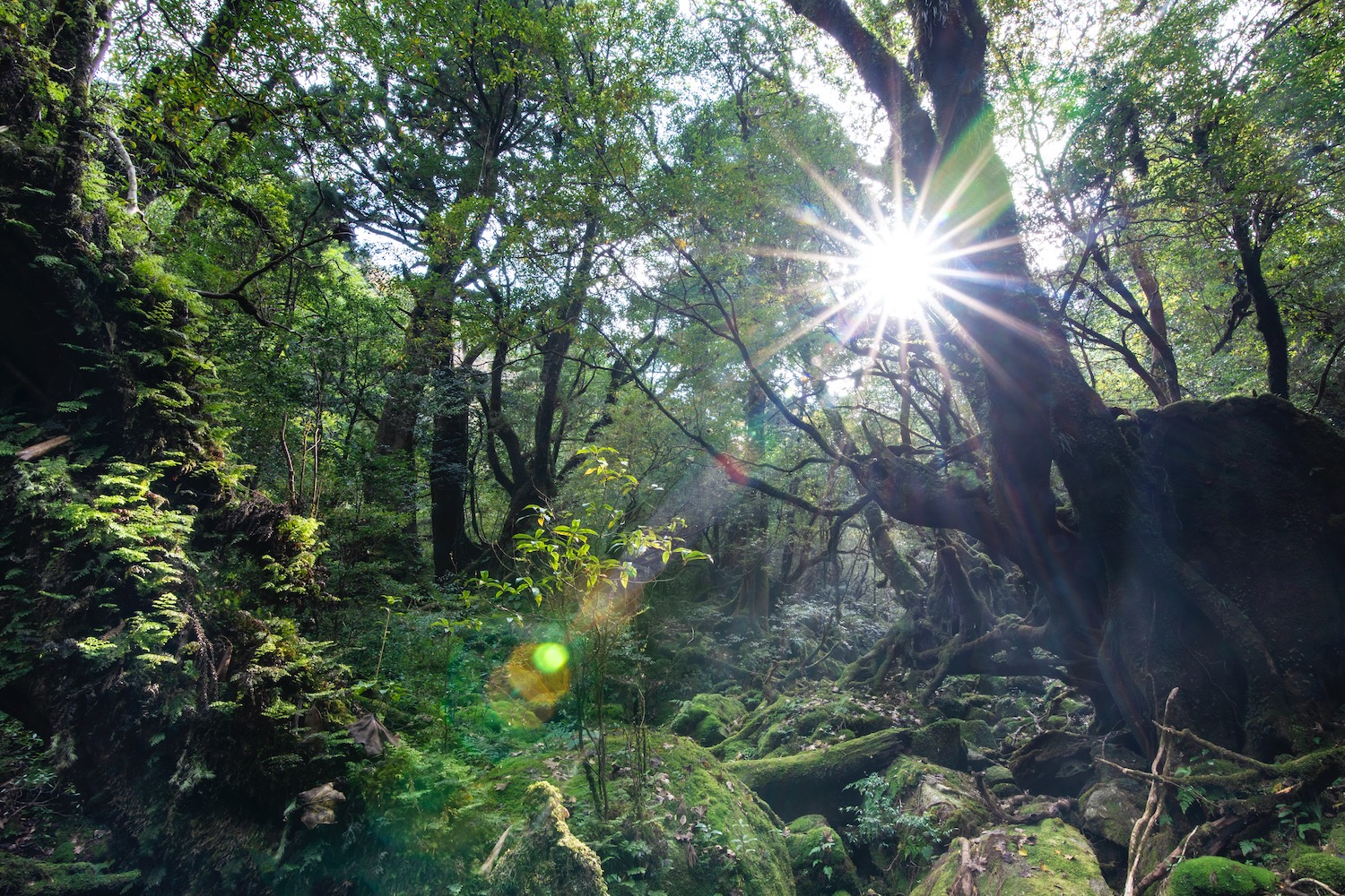Princess Mononoke Forest in Yakushima Island, Japan